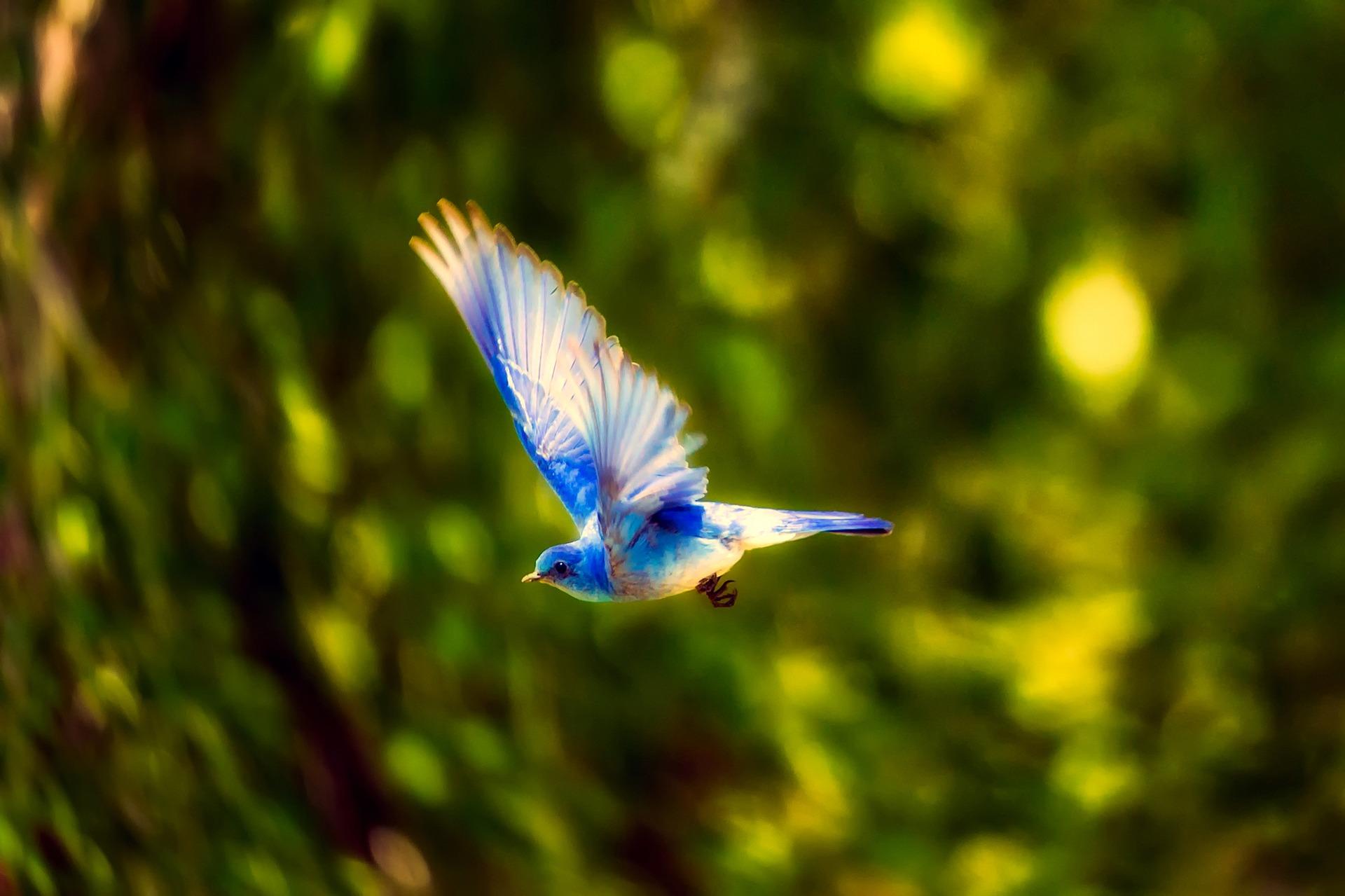 bird-2361184_1920