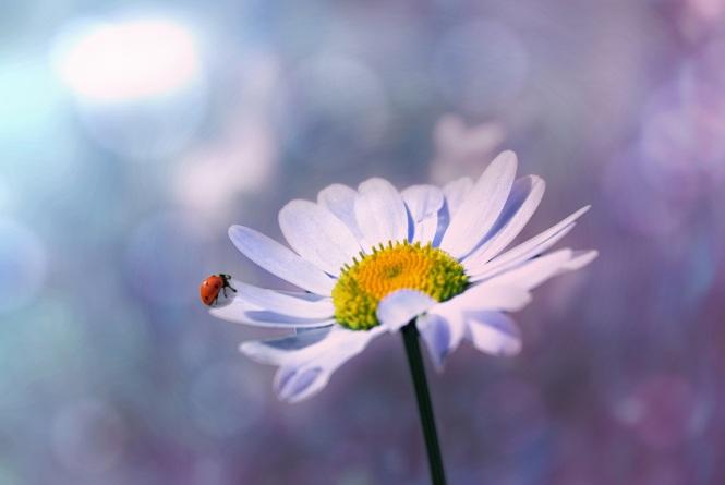 ladybug-1320563
